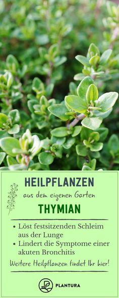 Heilpflanzen aus dem eigenen Garten - Thymian: Thymian ist nicht nur ein leckeres Gewürz, sondern hat auch eine schleimlösende Wirkung und lindert Symptome einer Bronchitis. Weitere tolle Heilpflanzen und ihre Wirkungen stellen wir Euch hier bei Plantura vor. #Thymian #Heilpflanze #Heilkraut Stopped Up Toilet, Septic Tank Systems, Clogged Toilet, Kraut, Bronchitis, Herbs, Plants, Trommler, Food