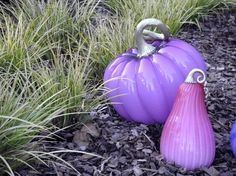 Purple pumpkin and Pumpkin gourd!  Raise awareness of Dravet syndrome and Epilepsy.
