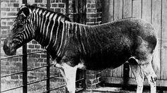 TOP 10 animales extintos