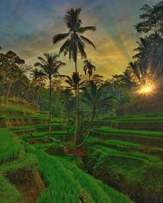 Tegalalang, Ubud #Bali  . Do you dream of traveling the world to tell the stories of its amazing people, places and experiences? My friends at @beautifuldestinations are hiring for the World's Coolest Job! They're seeking passionate photographers and videographers to join their team. Visit their website and Instagram for more information on how to apply #BDTea
