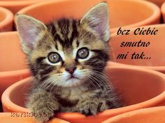 Most Popular Wallpaper Cute Pictures Of Cats And Kittens Kittens Cutest Baby, Cute Little Kittens, Cute Kittens, Cats And Kittens, Love Dogs, I Love Cats, Kitten Wallpaper, Pets Online, Grey Kitten