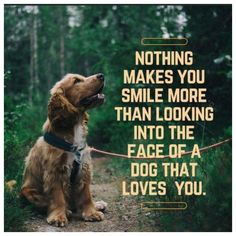 Love My Dog, Puppy Love, Funny Dogs, Cute Dogs, Canis, Dog Quotes Love, Sweet Dog Quotes, Losing A Dog Quotes, Dog Best Friend Quotes