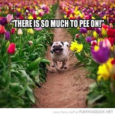 Just one of the many benefits of spring... #lol