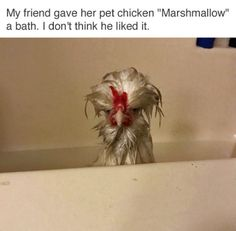 ImgLuLz Serve you Funny Pictures, Memes, GIF, Autocorrect Fails and more to make you LoL. Animal Jokes, Funny Animal Memes, Cute Funny Animals, Funny Animal Pictures, Funny Cute, Best Funny Pictures, Funny Photos, The Funny, Funny Memes