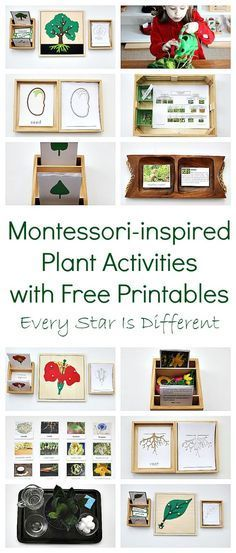 Montessori-inspired plant learning activities with free printables....