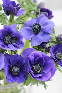 A Bunch for the Weekend-# 103-Deep Blue Anemones-Ingrid Henningsson-Of Spring and Summer