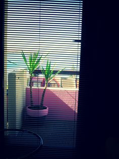 https://flic.kr/p/L1mtXo | A E S T H E T I C - Miami - VAPORWAVE - Pink - Plant