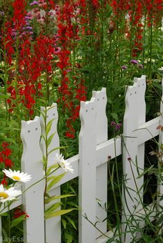Those who know me well are aware that I am somewhat child-phobic. My own offspring are now grown up-humans, and thrusting myself into situat. Country Fences, Gothic Garden, White Picket Fence, Picket Fences, Garden Structures, Garden Gates, Dream Garden, Yard Art, Red Flowers