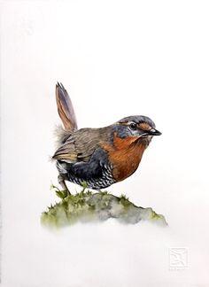 Chucao #chileanbird @lorenafrohlich watercolor Watercolor Bird, Watercolour Painting, Watercolors, Beautiful Butterflies, Beautiful Birds, Image Resources, Fauna, Wild Birds, Bird Prints