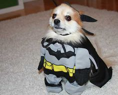"Community: Cats And Dogs Get Ready For ""The Dark Knight Rises"""