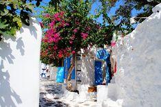 世界遺産 ミコノス島 ミコノス島の絶景写真画像 ギリシャ