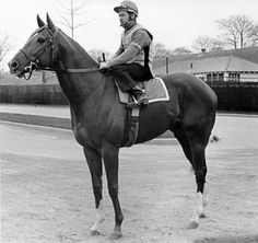 Secretariat horse page with past performances, results, pedigree, photos and videos. Secretariat horse rating and status. See who is a fan of Secretariat. Pretty Horses, Horse Love, Beautiful Horses, The Great Race, Thoroughbred Horse, Clydesdale Horses, Breyer Horses, Sport Of Kings, Racehorse