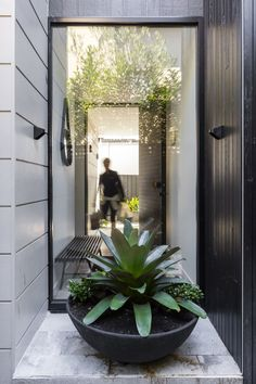 The rose bay house by the designory is a fully realised example of design c Outdoor Pots, Outdoor Gardens, Outdoor Living, Outdoor Spaces, Garden Architecture, Architecture Design, Rose Bay, Home Modern, Front Entrances
