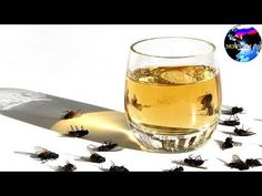 Spray This Safe Homemade Mix In Your House To Kill All Flies, Cockroaches And Mosquitos Instantly