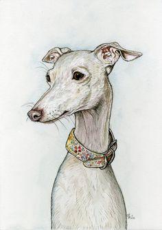 Italian Greyhound Dog Print