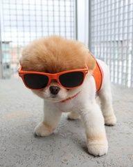 love dog, im sure that u know Boo.. the cutez dog ^^ :D im love it #cute#dog