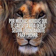 Consulta esta foto de Instagram de @mentesmillonarias • 2,172 Me gusta Motivational Phrases, Inspirational Quotes, Mentor Of The Billion, Lion Quotes, True Feelings, Strong Quotes, Spanish Quotes, Powerful Words, Qoutes