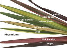 PlantWerkz: New Zealand Flax – Phormium Tenax color varieties - Winter Garden Planting Shrubs, Garden Shrubs, Landscaping Plants, Garden Plants, Landscaping Ideas, Xeriscape Plants, Garden Types, New Zealand Flax, Flax Weaving