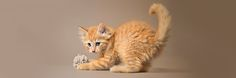 Image result for cat playing with ball