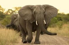 Image result for photos of elephants