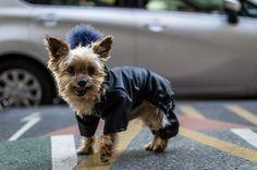 Dog Costume Leather