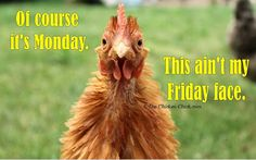 Of course it's Monday. This ain't my Friday face. Chicken Chick, Chicken Humor, Chicken Art, Funny Chicken, Coffee Jokes, Funny Animals, Cute Animals, Chicken Pictures, I Hate Mondays