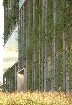 Sustainable design green living wall vertical garden KMC Corporate Office / RMA Architects