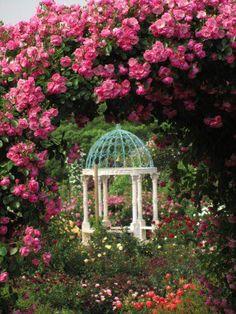 Gazebo, Outdoor Structures, Plants, Roses, Twitter, Kiosk, Pink, Pavilion, Rose