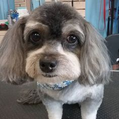 Akelah #tucsondoggrooming #doggrooming #wagsmytail #cuteface A well groomed dog is a well loved dog! Call us today to schedule your dog grooming appointment 520-744-7040