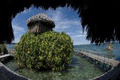 Punta Laurel in Bocas del Toro, Panama