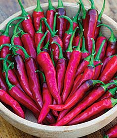 Pepper, Hot, Dragon Cayenne.Five times hotter than jalapeño, fire-breathing 'Dragon' adds flame and flavor to Mexican and Asian dishes.