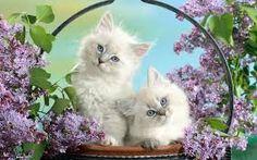 Risultati immagini per dolci gattini