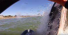 Überraschung: Wal taucht vor Paddle-Board auf! #News #Unterhaltung