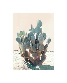 """""""Blue Cactus"""" - Art Print by Wilder California in beautiful frame options and a variety of sizes."""