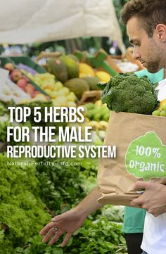 There are a handful of herbs that have been shown to offer excellent support for the male reproductive system.    These herbs may be very supportive for men who are suffering from low sperm count, poor sperm motility, poor sperm morphology, low libido, stress and/or physical sexual dysfunction. #fertility #infertility #ttc #ttcsisters #IVF #PCOS #fertilityherbs #naturalfertility #NaturalFertilityShop #NaturalFertilityInfo #fertilityjourney