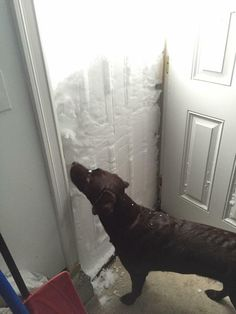 @spann on Twitter How would you like to open your front door and see this? East Lancaster, NY… Photo from Tara Schwab