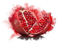 Amazing Pomegranate watercolor