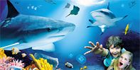 SEA LIFE Benalmadena transports visitors into the amazing ocean world, providing close encounters with a vast array of creatures.