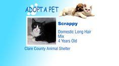 Adopt A Pet: Tiny, Scrappy and Peanut