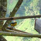 «PAJARO» de LeytonKit #Bird #nature #plumage #black #yellow, #green, #plants, #trees, #sun, #tranquility, #garden, #wood, #rest, #wings, #feathers, #beak, #fly, #bird, #color, #life.