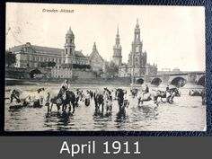 April 1911 - Horses in River Elbe in Dresden Dresden Bombing, Dresden Germany, Postwar, East Germany, Vintage Travel Posters, Historic Homes, Old World, Berlin, The Past