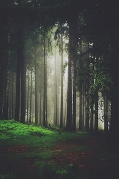 A moody forest - via www.murraymitchell.com