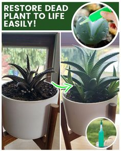 Succulents Garden, Garden Plants, House Plants, Container Plants, Container Gardening, Fertilizer For Plants, Liquid Fertilizer, Growing Plants Indoors, Medicinal Plants