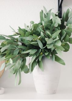 Find realistic artificial plants for your home. Shop faux plant favorites such as eucalyptus, fern, fiddle leaf, and more. Afloral is the go to place for artificial trendy house plants that are hassle free, no water required! Silk Plants, Fake Plants, Foliage Plants, Artificial Plants, Artificial Eucalyptus Garland, Eucalyptus Branches, Seeded Eucalyptus, Faux Olive Tree, Orchid Leaves