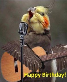 Sometimes cockatiels are like that Funny Birds, Cute Birds, Pretty Birds, Beautiful Birds, Animals Beautiful, Cockatiel, Budgies, Cute Little Animals, Cute Funny Animals
