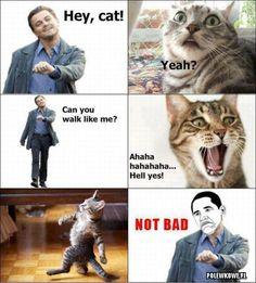 walk like me!   #funny, #cat,  #humor