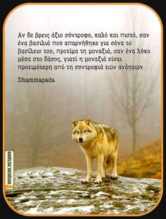 Greek Quotes, Relationship Quotes, Wise Words, Wolf, Messages, Thoughts, Sayings, Pets, Clever