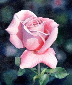 FAIR MAIDEN pink rose watercolor painting -- Barbara Fox