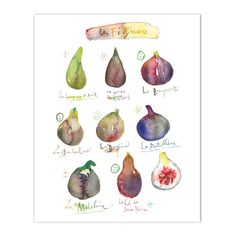 """Figs Archival giclee reproduction print from my watercolor illustration. Signed with pencil. Printed on fine art """" BFK Rives """" hot-pressed paper, smooth surface, 140 lb, 100% cotton (acid free ), usin"""