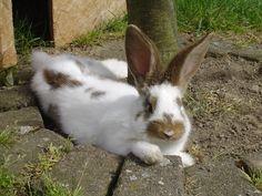 Kaninchen in Außenhaltung  Die wohl natürlichste Haltung unserer Kaninchen ist die Außenhaltung. Nicht jeder kann seinen Nasen dies ermöglichen, aber falls doch findest du hier die passenden Tipps.